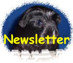 Newsletter anmelden